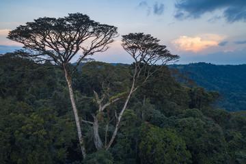 Floresta tropical de escarpa na província do Záire, Angola
