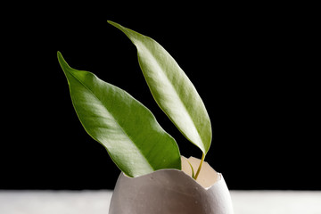 Sprout leaves green plant from eggshell Revival concept