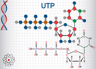 Uridine triphosphate (UTP) nucleotide molecule , is used for the synthesis of RNA. Structural chemical formula and molecule model