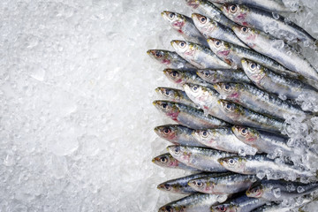 Raw sardine on ice offered as top view with copy space right