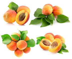 collection of apricots isolated on a white background
