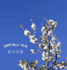 Chinese New Year background with spring blossom