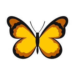 Insect butterfly with pattern on wings icon