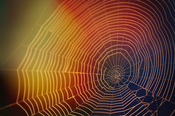 Abstract Nature Photography of Spider Web in the Sunlight with Many Colors