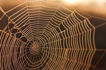 Macro Shot of a Spider Web in the Sunshine Background Texture