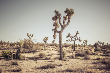 Tree in a remote desert