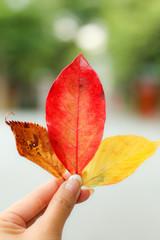 カラフルな葉っぱ