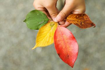 カラフルな葉っぱ手持ち
