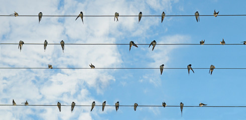 Flock of swallows on blue sky background.