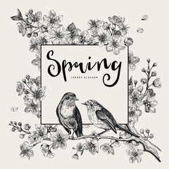 Wall Mural - Spring. Pink cherry blossom branch witch birds. Vector botanical illustration. Black and white