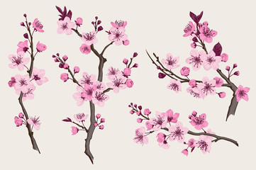 Sakura. Pink cherry blossom branch. Vector botanical illustration. Set Fototapete