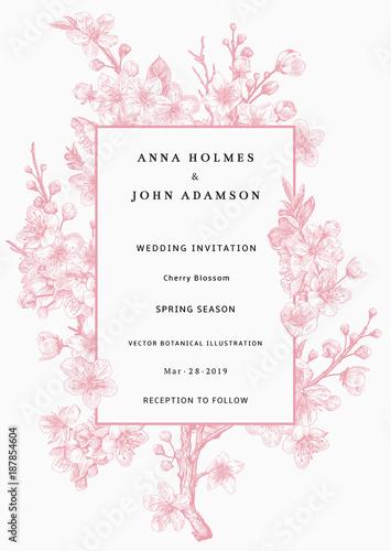 Wall mural Sakura. Wedding invitation. Pink cherry blossom branch. Vector botanical illustration.