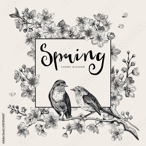 Wall mural Spring. Pink cherry blossom branch witch birds. Vector botanical illustration. Black and white