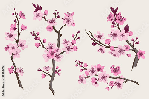Wall mural Sakura. Pink cherry blossom branch. Vector botanical illustration. Set