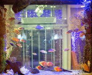 Beautiful aquarium with tropical fish on a white background