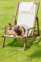 se mettre au vert, vache dans chaise-longue sur pelouse