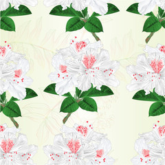 Seamless texture flowers white rhododendrons twig mountain shrub vintage vector illustration editable hand draw
