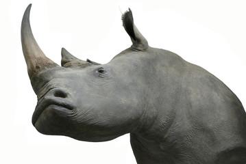 rhinos head taxidermy object isolated
