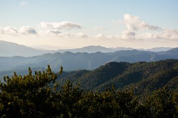 Photo of vegetation in hills