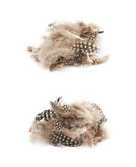 Decorational feathers isolated
