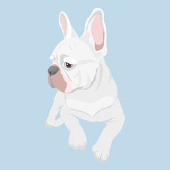 White french bulldog lying isolated on baby blue background. Purebred canine hand drawn illustration. French Bulldog lying and looking sideways.
