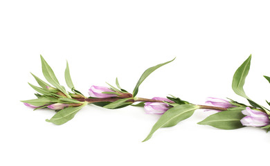 Decorational flower isolated
