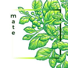Vector modern nature template. Mate branch