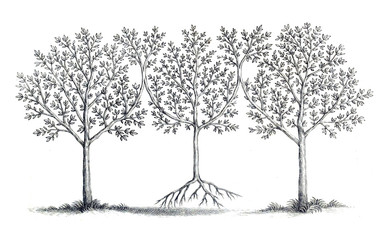Illustration of a tree.