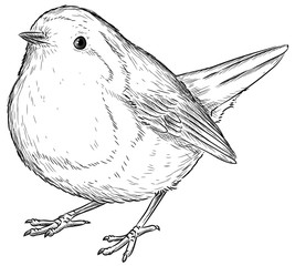 Rotkehlchen - Vektor-Illustration
