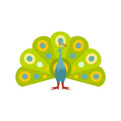 Colorful peacock icon, flat style