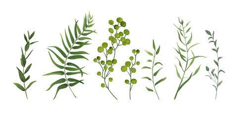 Vector designer elements set collection of green forest fern, tropical palm green berry greenery art foliage natural leaves herbs in watercolor style. Decorative beauty elegant illustration for design Fotoväggar