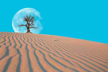 "Global warming concept. Lone dead tree against white moon  ""Elements of this image furnished by NASA """