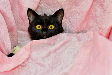 black and tabby kittens cuddling together in a pink bed