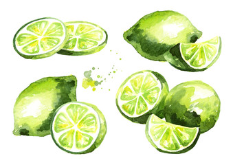 Fresh lime fruit compositions set. Watercolor hand drawn illustration