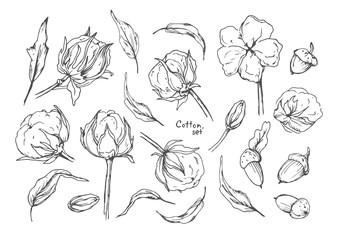 Cotton ball flower, leaves and acorn seed hand drawn ink designer elements set, bundle. Beautiful cute lovely art drawing, sketch for your design. Gray linear illustration isolated on white backgorund