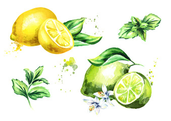 Lime, lemon and mint leaves isolated on white background set. Watercolor hand drawn illustration