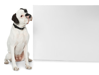 Cute dog and blank advertising board on white background