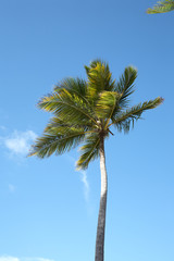 Palm trees at Punta Cana beach. Dominican Republic.