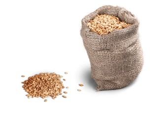 Wheat Seeds in a Bag