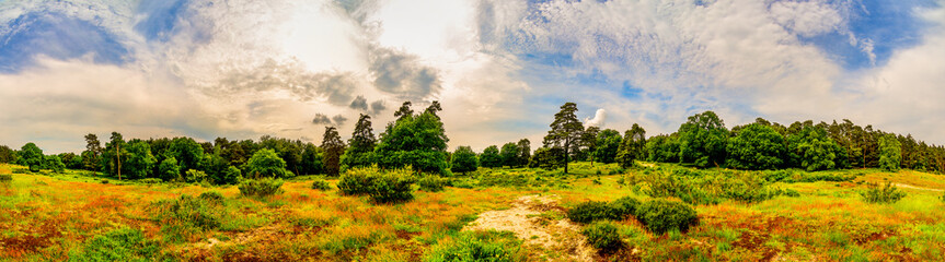 Wall Mural - Landscape in spring with forest, meadows and moody sky