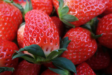 Fresh and red strawberries