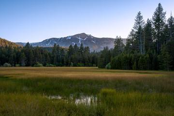 Lake Tahoe Meadow