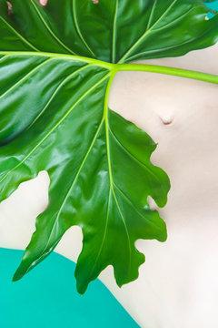 Leafy Navel