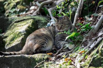 Taiwan monkey cave, cat village, tree under the cat,
