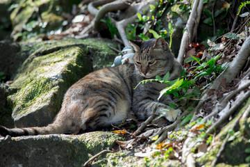 Taiwan monkey cave, cat village, tree under the cat,