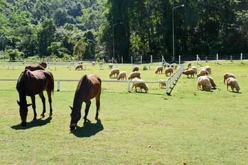 Horses on the Farm, Grazing horses