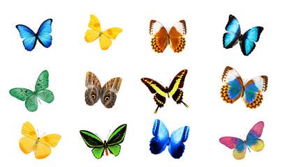 набор цветных тропических бабочек изолированные на белом