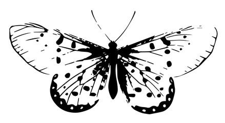 Schmetterling-Lepidoptera-butterfly-vintage#vector