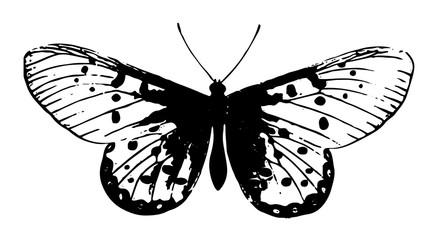 Schmetterling-Lepidoptera-butterfly-vintage