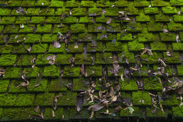 Wood roof, covered with moss.